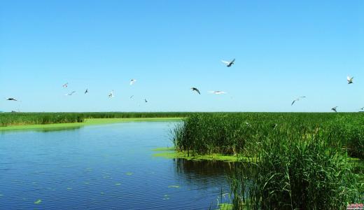 湿地生态恢复工程造价咨询预算